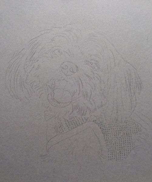 How to Draw White Fur - Begin with a detailed line drawing