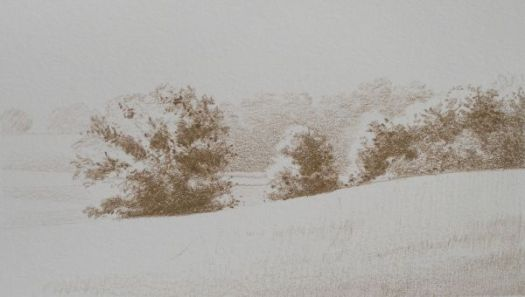 How to Draw Trees with an Umber Under Drawing