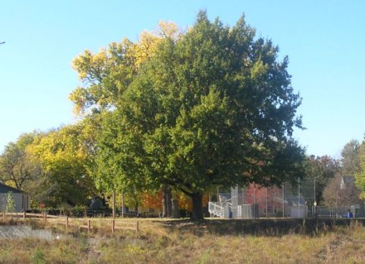 To make trees look real, shade each of the smaller shapes within the larger shape.