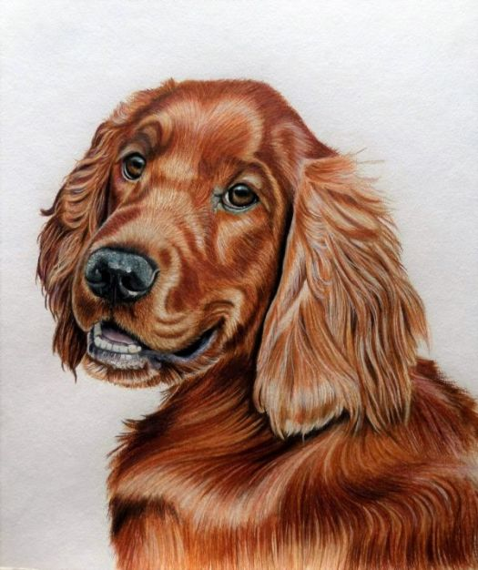 How to Draw an Irish Setter - Nearly finished