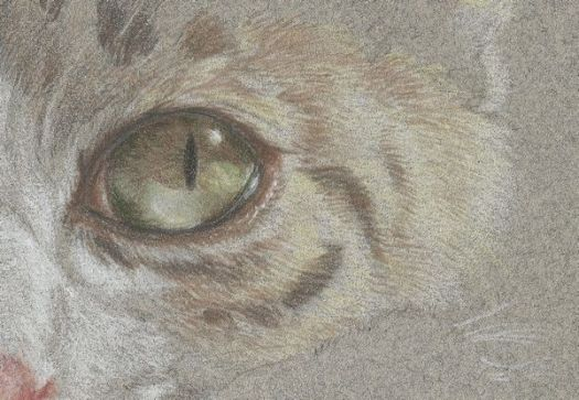 How to draw short cat fur - add layers of color in fur-like strokes to create depth.