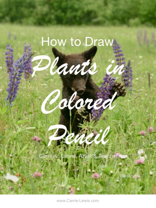 How to Draw Plants in Colored Pencil