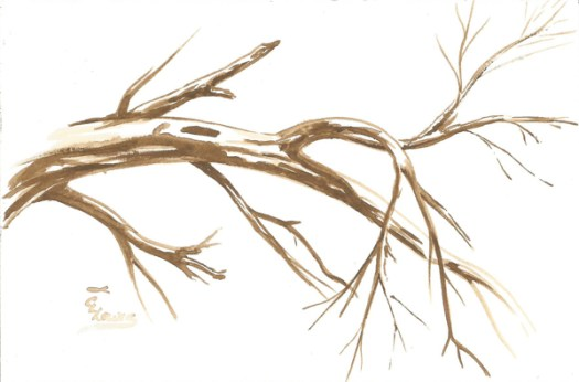 Weekly Sketch Along Tree Bones in Watercolor