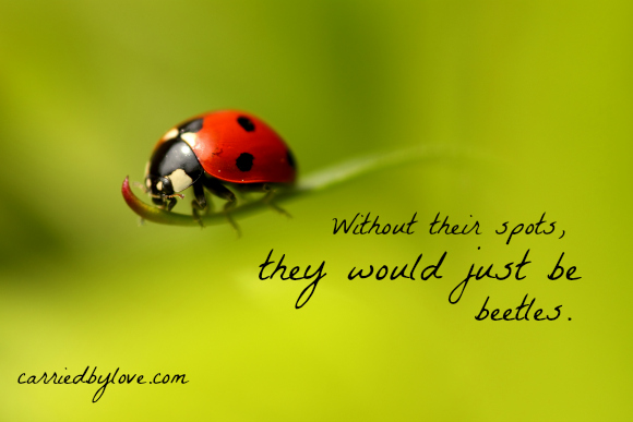Without their spots, they would just be beetles.