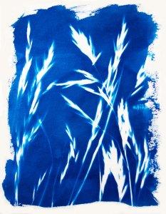 Wheat4x6
