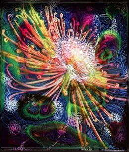 Cosmic Chrysanthemum detail