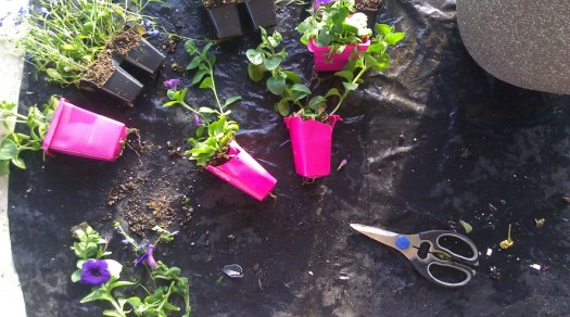 © plastic flower containers cut ready to safely remove the plants.