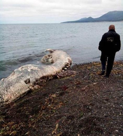 sea-monster-carcass-2