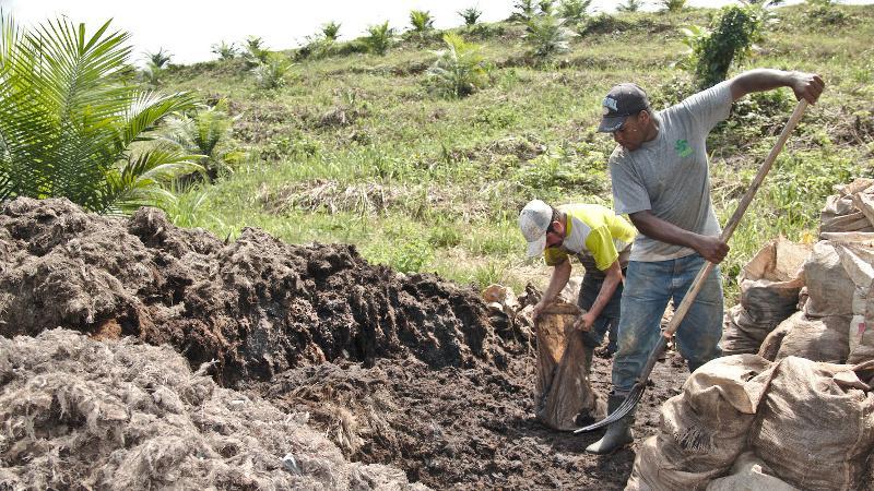 Trabajadores abonando las plantaciones en la región de Esmeraldas, Ecuador. Foto;Jheisson A. López