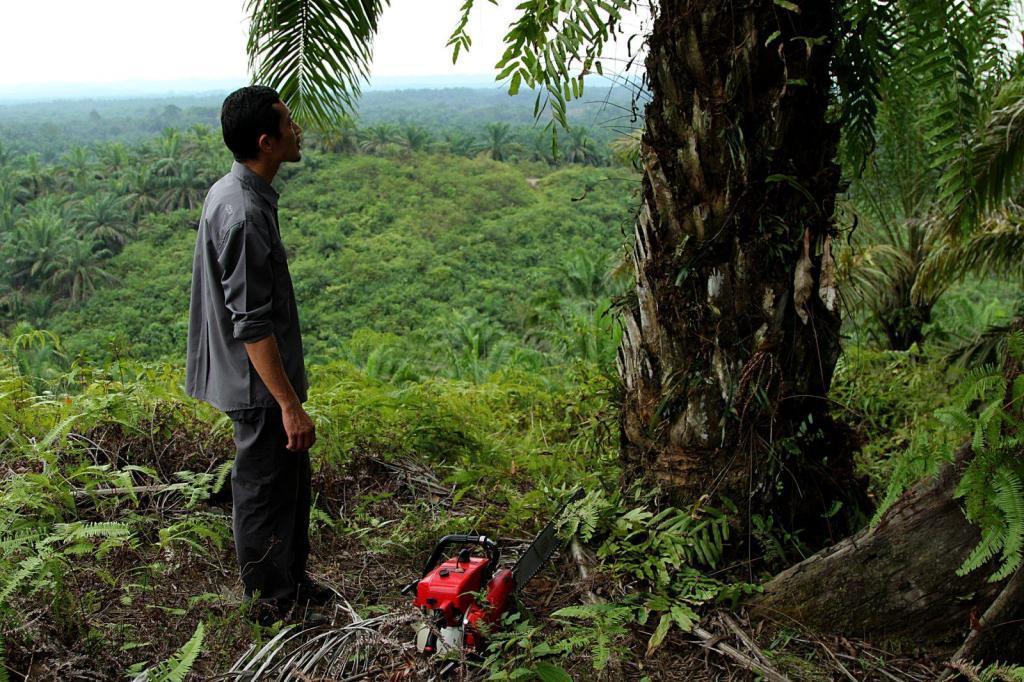 Rudi Putra empezó a desmantelar plantaciones de aceite de palma en 2007./ Laura Villadiego