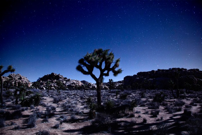 Stargazing in Joshua Tree National Park