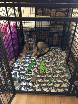 Heavy duty dog crate by Xtreme from CarryMyDog.com Lisa A.