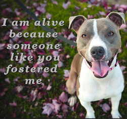 I am alive because someone like you fostered me.