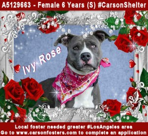 Urgent Dogs Foster Needed  Carson Fosters: Foster/rescue matching