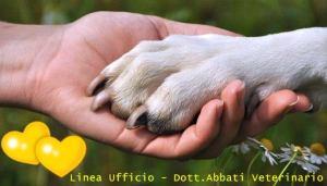 San Valentino un gesto d'affetto con gli amici animali