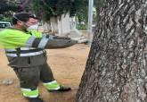Campaña de control de la procesionaria del servicio de Parques y Jardines