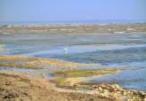 El Ayuntamiento de Cartagena prepara una demanda judicial por inactividad de la administración responsable de la retirada de secos y lodos en el Mar menor sur.