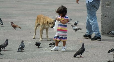 """Los Nublados del Día: """"Vosotras, palomas vulgares me evocáis todas las cosas"""""""