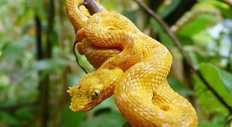 Parque Ambiental Municipal Río Loro estrena serpentario