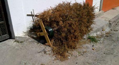 3 municipalidades cartaginesas reciclarán árboles de navidad