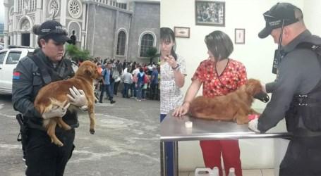 6 perros fueron envenenados en los alrededores de la Basílica de los Ángeles