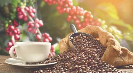 Turrialba abre sus puertas a los amantes del café costarricense