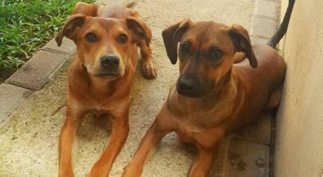 Auxilio Animal busca propiedad de alquiler para albergar perritos rescatados