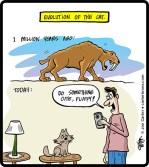 Cat-Evolution