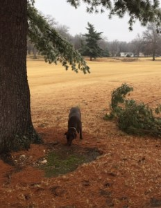 Cleo checing out the tree damage