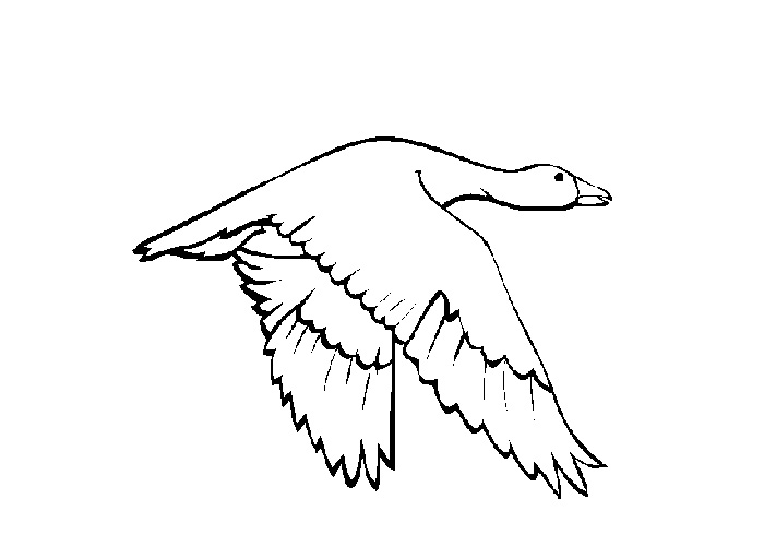 snow goose coloring page free snow goose online coloring