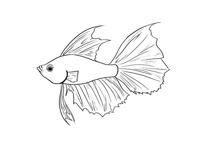 betta fish coloring pages jpg