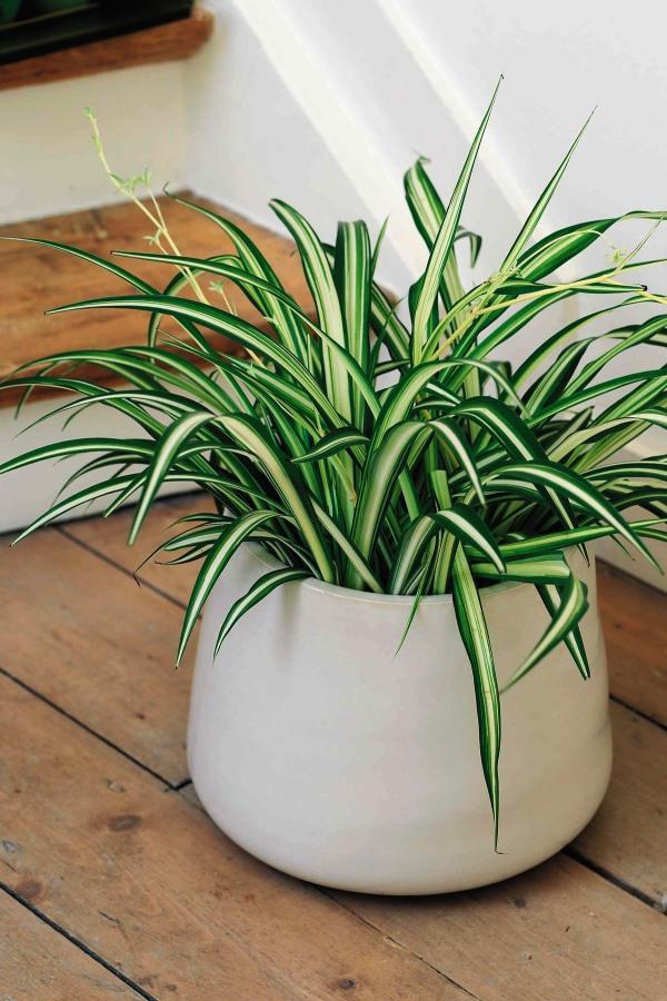 Pretty Indoor Plants