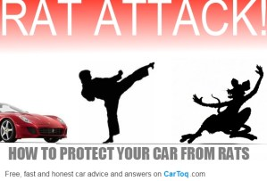 protect your car from rats and mice