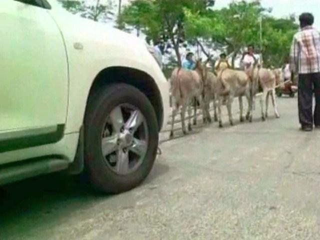 Toyota Land Cruiser pulled by donkeys 2