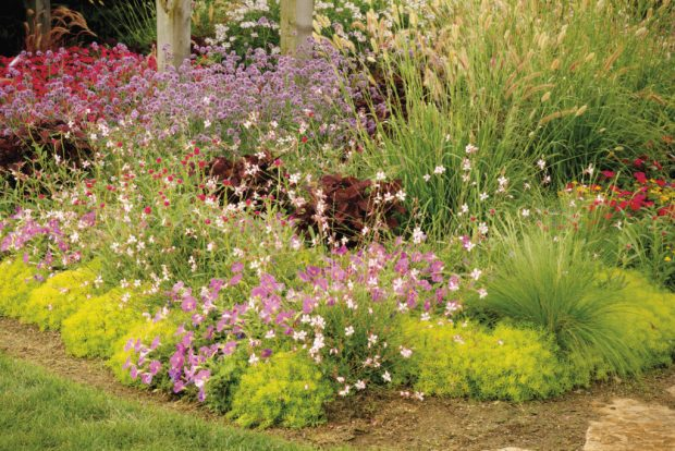 flowering landscape