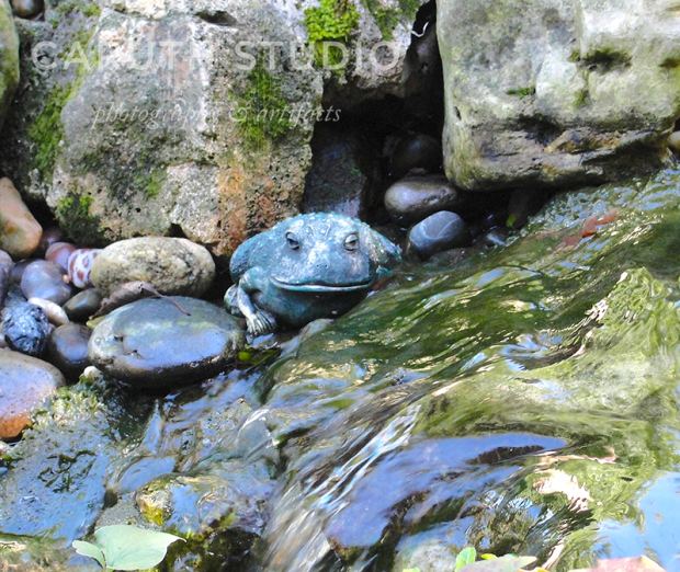stone Frog by waterfall