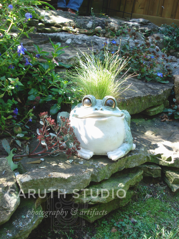 Frog planter with grass growing out of the head and a goofy look