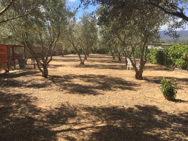 De olijvengaarde van Casa Amigo