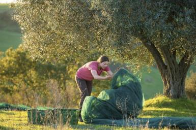 Avvolgendo le olive della giornata