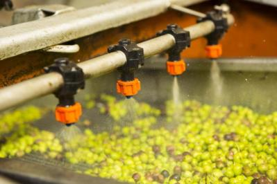 Spraying the olives