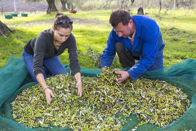Sistemazione delle olive