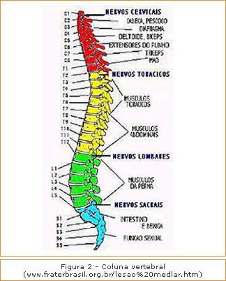 Figura 2 - Coluna Vertebral