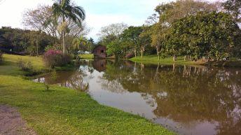 timbo-jardim-botanico-10