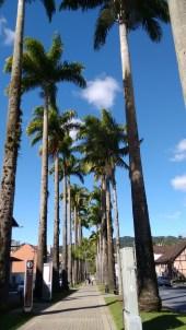 rua-das-palmeiras-blumenau-2