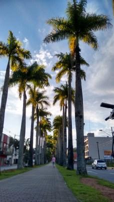 rua-das-palmeiras-blumenau-4