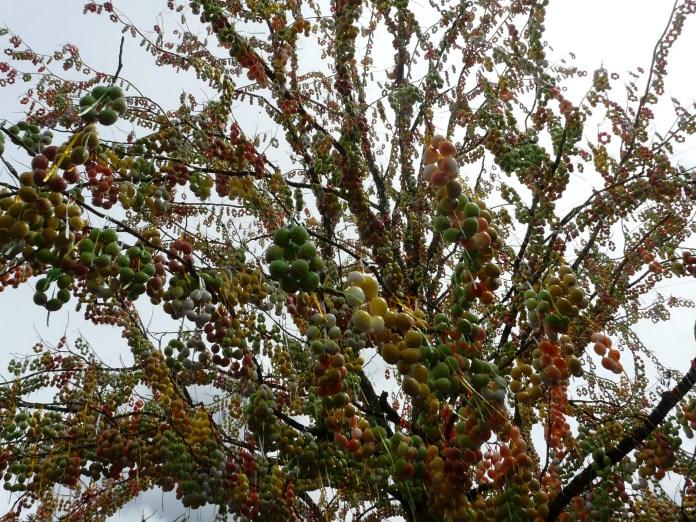 Osterfest Pomerode ou Festa da Páscoa e sua árvore com mais de 80 mil casquinhas de ovos.