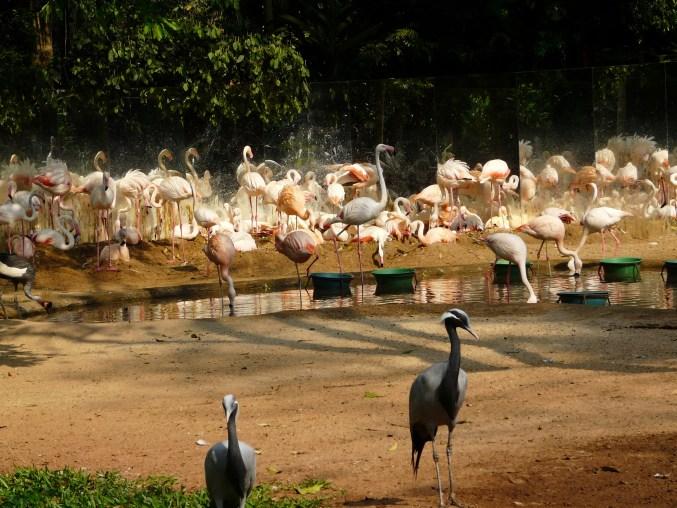 parque-das-aves-244