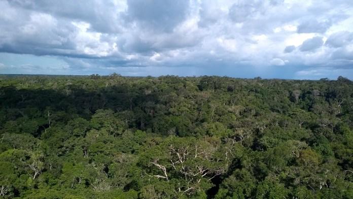 MUSA- Museu da Amazônia Manaus vista da floresta