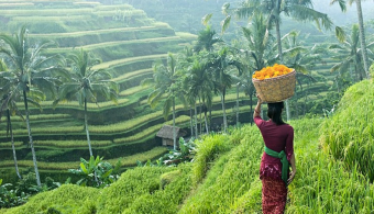 ultimate guide to ubud