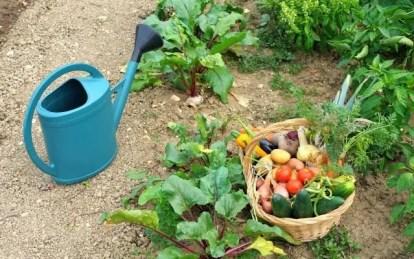 Verdure fresche dell'orto